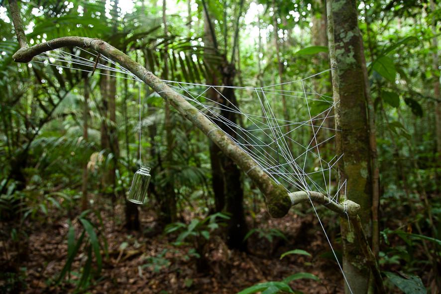 Redes para aranhas, folhas e afins #1