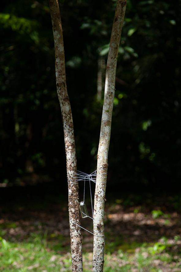 Redes para aranhas, folhas e afins #8