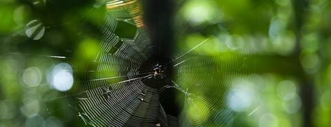 Redes para aranhas, folhas e afins #6