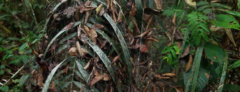 Redes para aranhas, folhas e afins #7