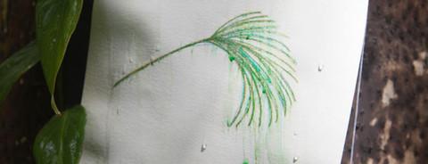 Aquarelas florestais #2
