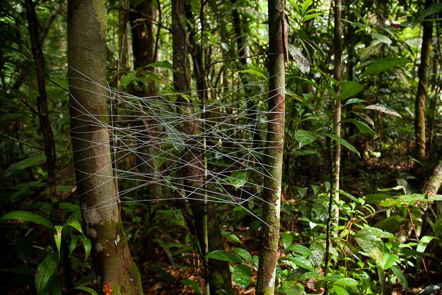 Redes para aranhas, folhas e afins #3