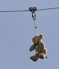 Teddy Zipline 3.jpg