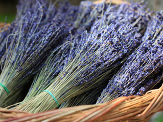 Lots of news from Lookout Lavender Farm including uPick dates