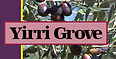 Yirri Grove Logo.jpg