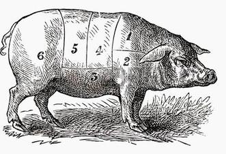 31552115-pig-illustration.jpg