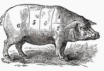 31552115-pig-illustration.jpg