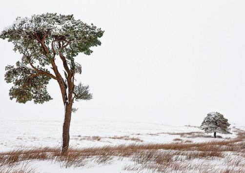 Winter's Grip - Nent Valley