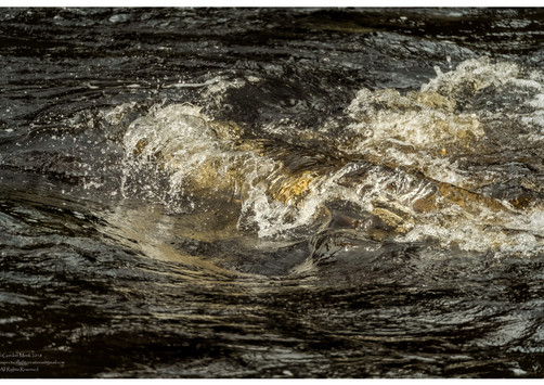 Alston - Wave from the South Tyne River