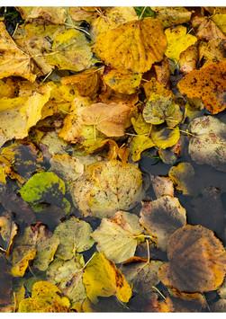 Colour - Autumn Puddle