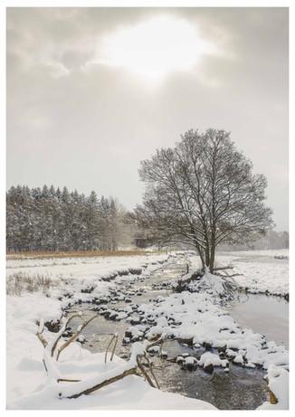Snowy River Tree
