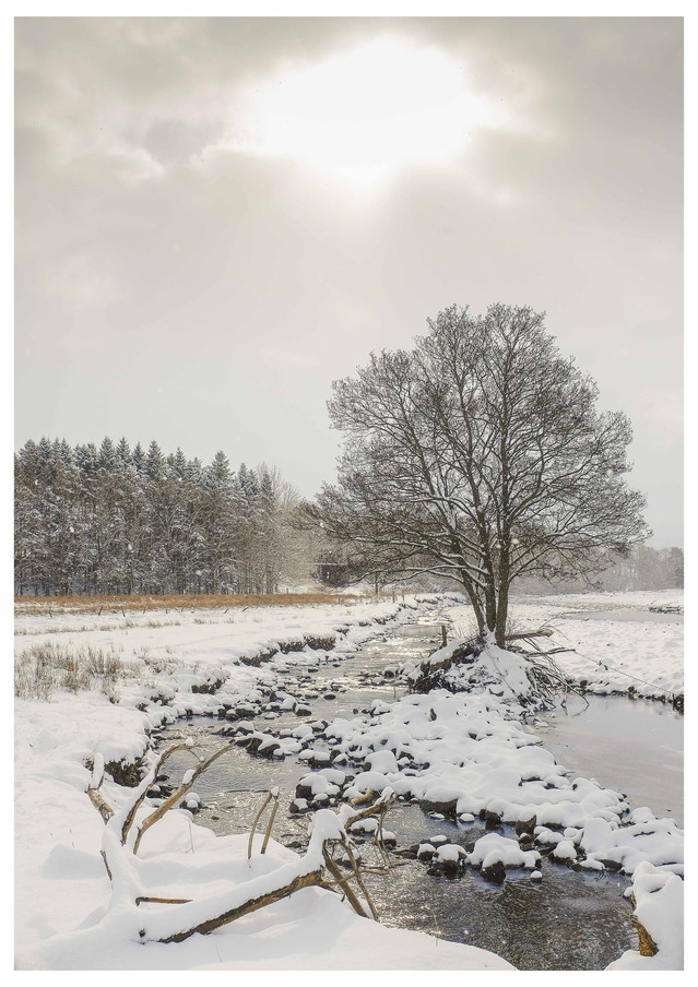 Snowy River Tree