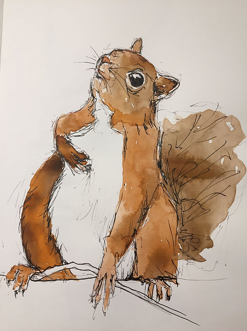 Red squirrel 'Who Me?' greetings card