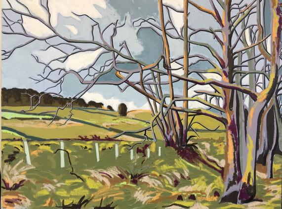 Trees South Tyne Alston.
