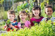 Up The Garden Bath - School Gardening