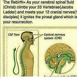 The Pineal Gland Your Connection To God