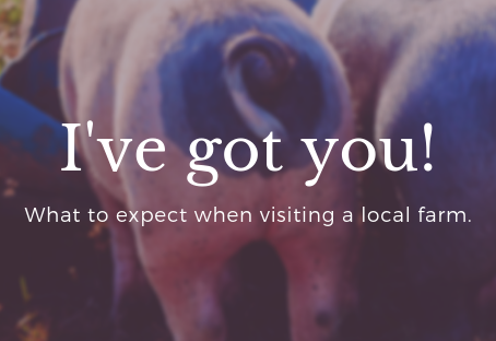 What to expect when visiting a local farm