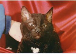 Кот Василий - прародитель большинств
