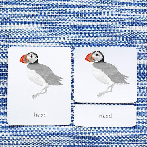 PARTS OF: PUFFIN BIRD