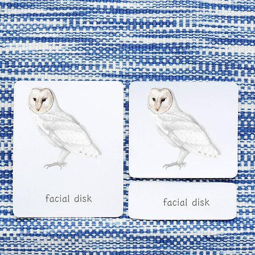 PARTS OF: OWL