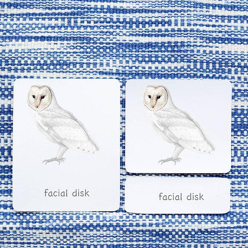 PARTS OF: OWL BIRD