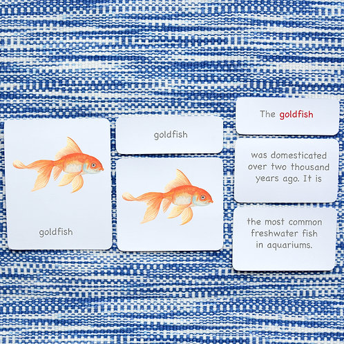 5 PART CARDS: FISH