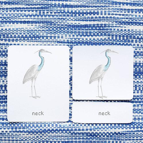 PARTS OF: HERON BIRD