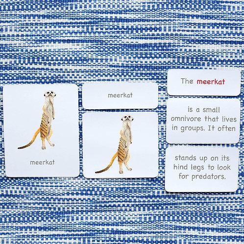 5 PART CARDS: WILD ANIMALS