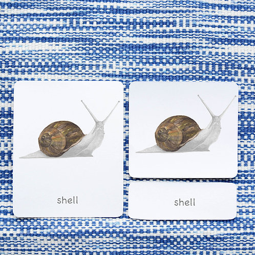 PARTS OF: SNAIL