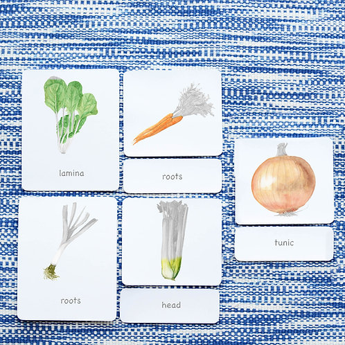 PARTS OF: VEGETABLES