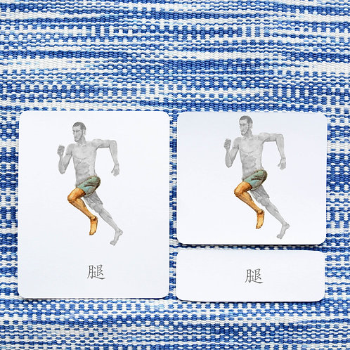 3 PART CARDS: BODY Chinese Simplified