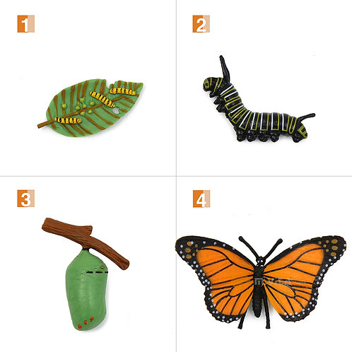Life Cycle Stages of a Butterfly Montessori Zoology