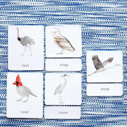 PARTS OF: BIRDS