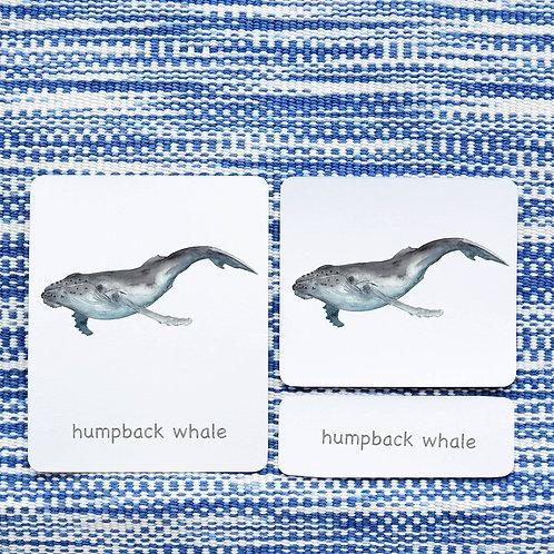 3 PART CARDS: SEA MAMMALS