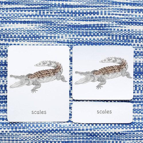 PARTS OF: CROCODILE REPTILE