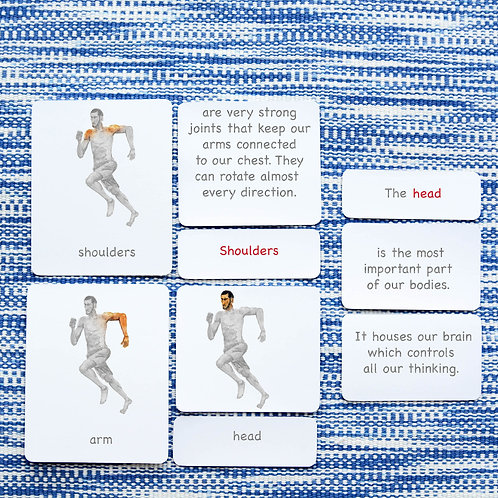 5 PART CARDS: BODY