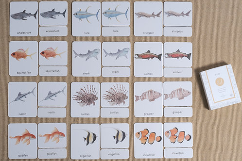 Fish 3-Part Cards English