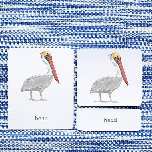 PARTS OF: PELICAN BIRD