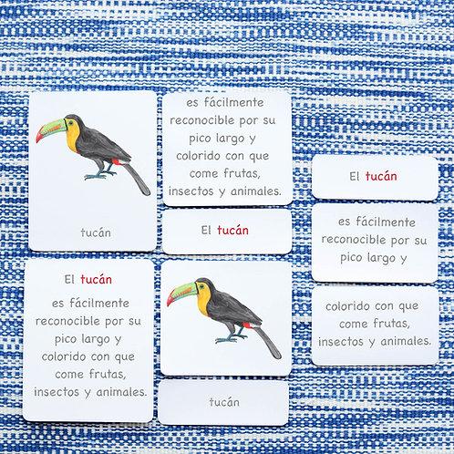 5 PART CARDS: BIRDS