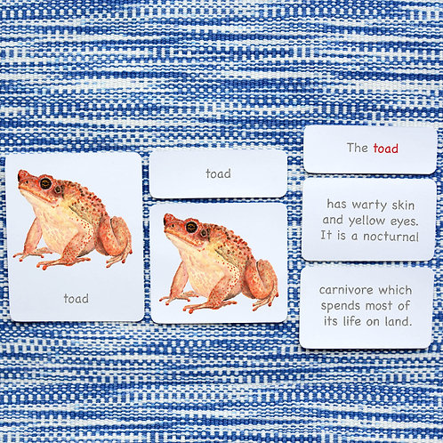 5 PART CARDS: AMPHIBIANS