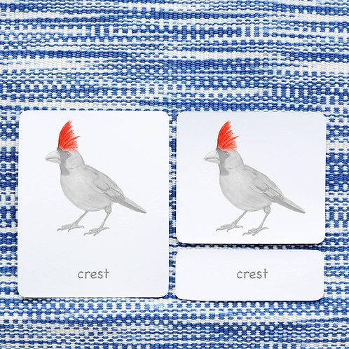 PARTS OF: CARDINAL BIRD