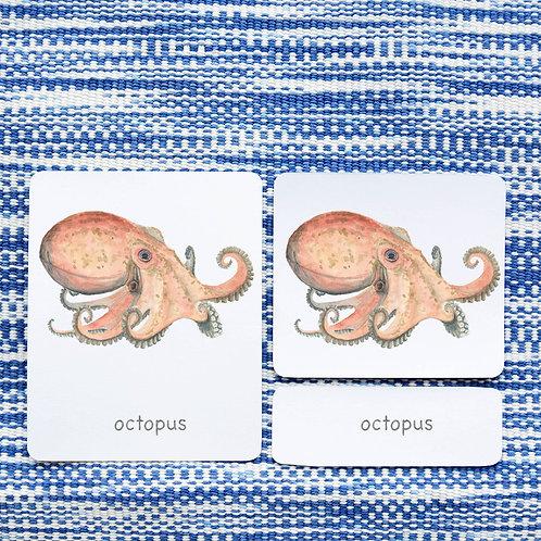 3 PART CARDS: INVERTEBRATES