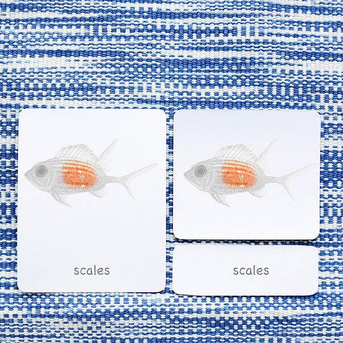PARTS OF: SQUIRRELFISH FISH
