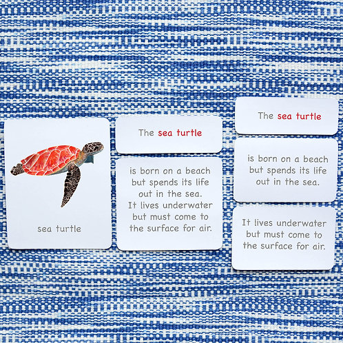 5 PART CARDS: REPTILES