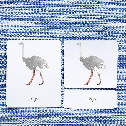PARTS OF: OSTRICH BIRD