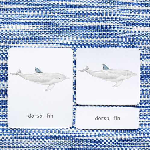 PARTS OF: DOLPHIN
