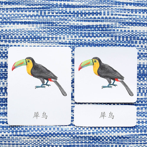 3 PART CARDS: BIRDS Chinese Simplified