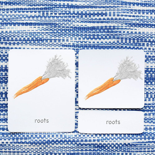 PARTS OF: CARROT VEGETABLE
