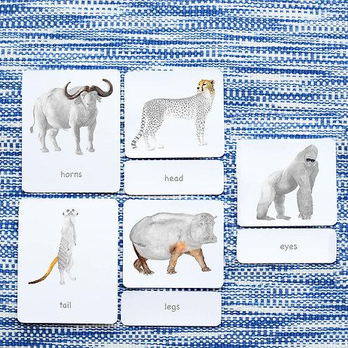PARTS OF: WILD ANIMALS
