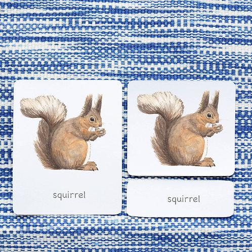 3 PART CARDS: MAMMALS